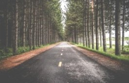 Tree lined road web icon